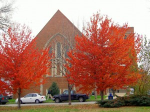 Rote Bäume im Herbst
